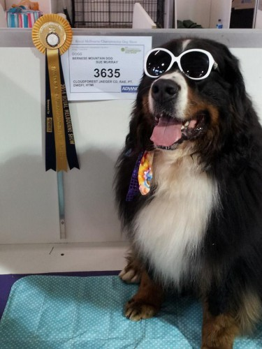 The very stylish Kai at the Royal Melbourne Show 28 September 2014