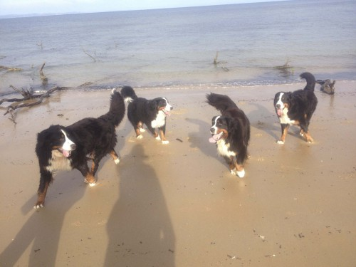 Beach Berners