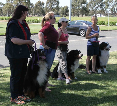 Our instructors: Sue, Nikki, Robyn and Wendy with their canine helpers