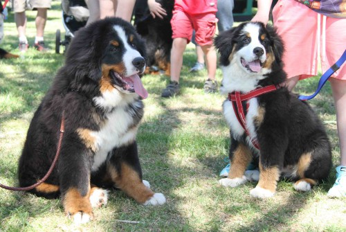 The two youngest canine attendees - Maverick and Lenny!