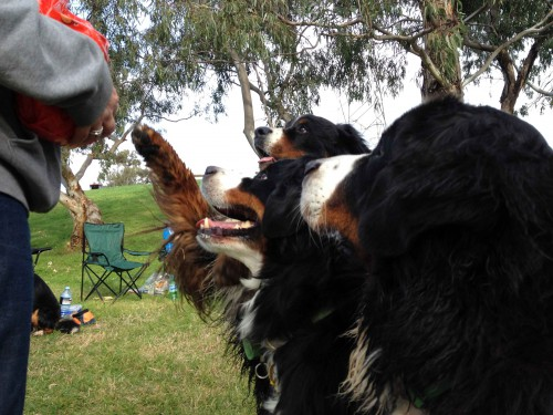 Three eager noses waiting for treats to fall from Lynne's hands