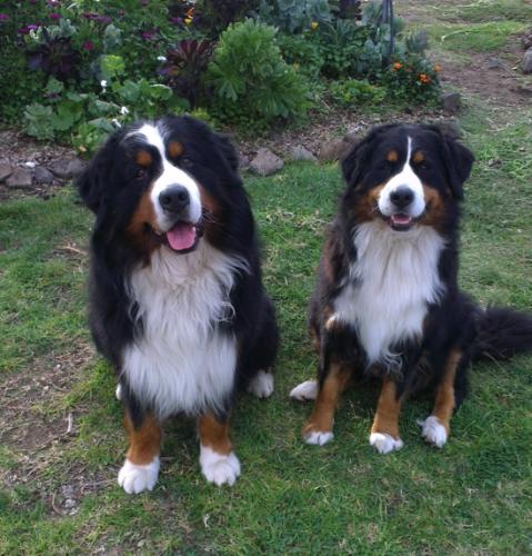 Rosie and Taiten