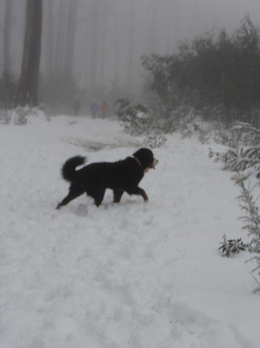 snow photo mf 2-2