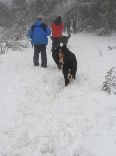 snow photo mf 3-2